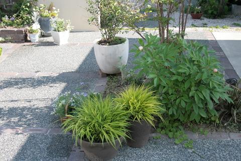 ざっくりと庭の様子_e0184445_9451555.jpg