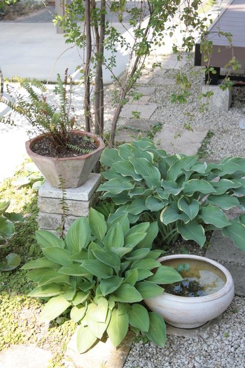 ざっくりと庭の様子_e0184445_9461418.jpg