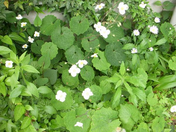 2012年5月11日_f0182246_13475044.jpg