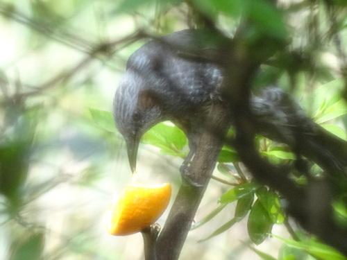野鳥の家_e0240147_8202585.jpg