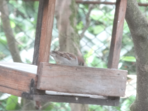 野鳥の家_e0240147_8211230.jpg