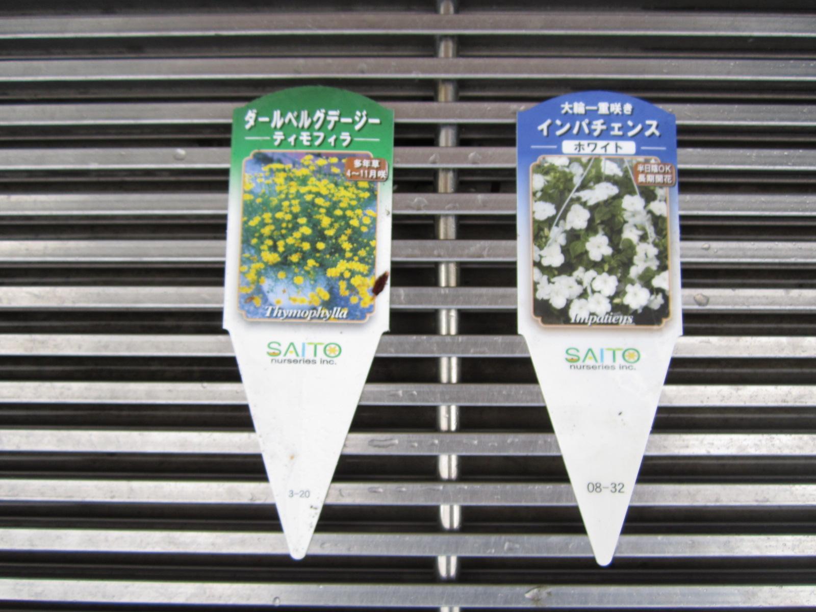 夏に向かって 日の丸花壇_f0205367_17134798.jpg