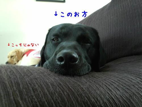 f0189870_1335224.jpg