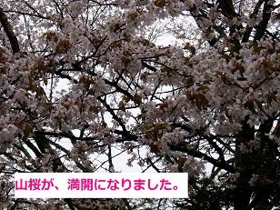 b0200310_1130457.jpg