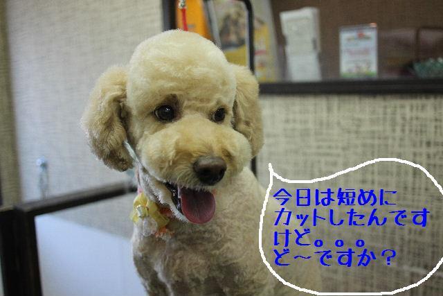 こんばんわぁ~!!_b0130018_2215459.jpg