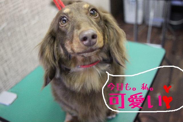 こんばんわぁ~!!_b0130018_225068.jpg