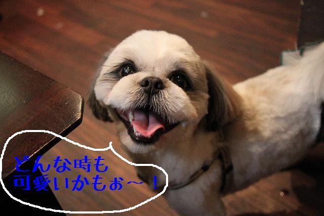 こんばんわぁ~!!_b0130018_2281075.jpg