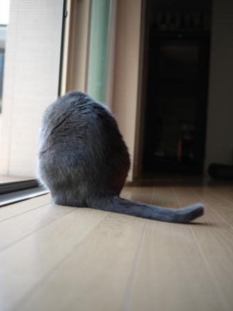 猫のお友だち カン太くん編。_a0143140_19293725.jpg