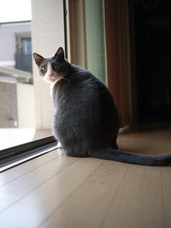 猫のお友だち カン太くん編。_a0143140_19304530.jpg