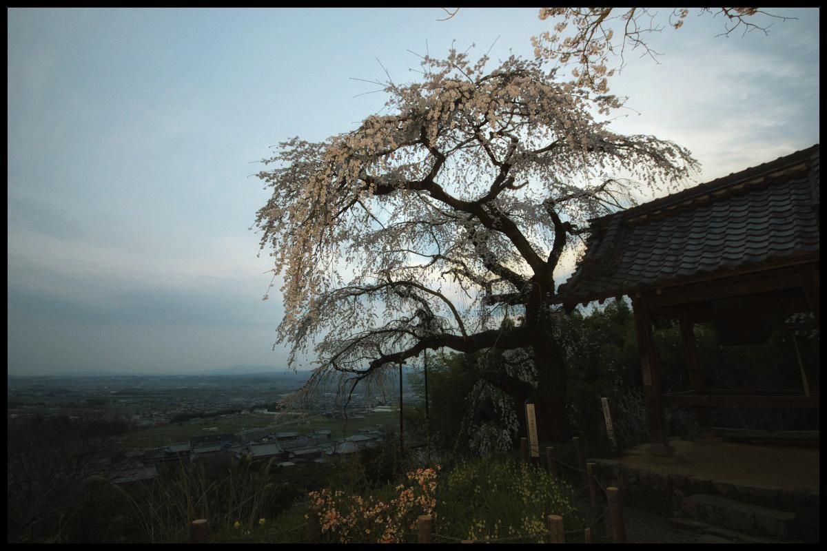 桜 2012  京都 <地蔵禅院>_f0021869_084643.jpg
