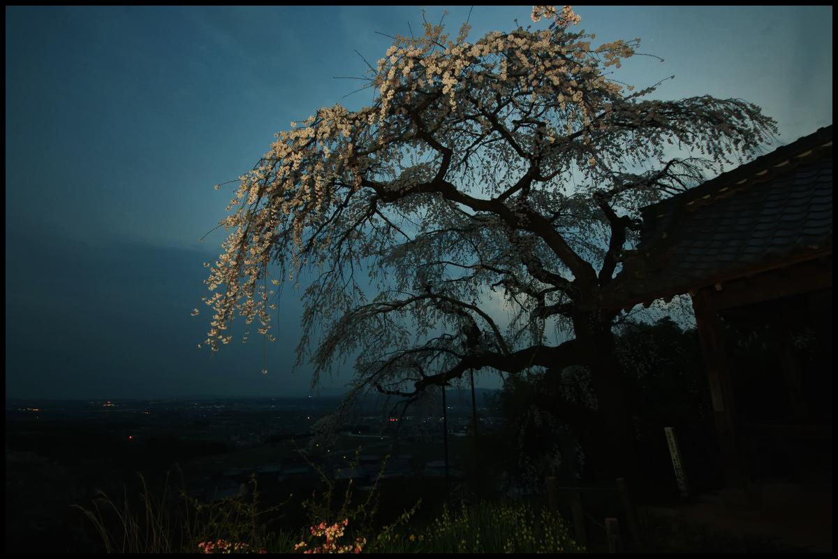 桜 2012  京都 <地蔵禅院>_f0021869_095614.jpg
