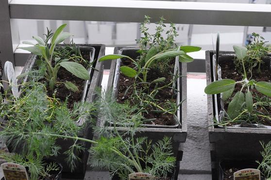 Fooding Gardening!_c0116778_14474521.jpg