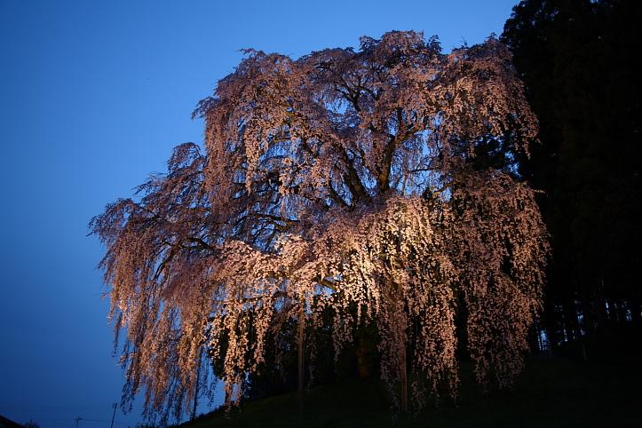 福島 桜巡り 二本松市・合戦場の枝垂れ桜 その2_e0165983_16133897.jpg