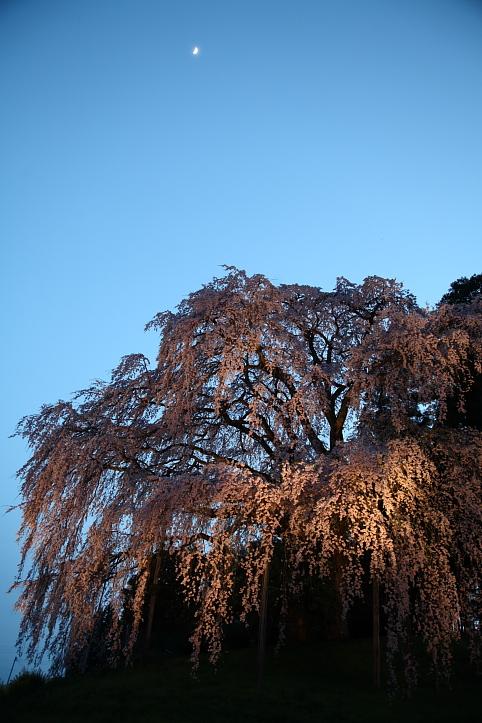 福島 桜巡り 二本松市・合戦場の枝垂れ桜 その2_e0165983_16144621.jpg