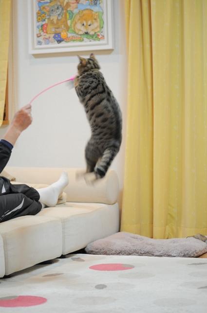 ぎんなんジャンプ!_a0126590_23141912.jpg