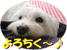 f0084422_523112.jpg