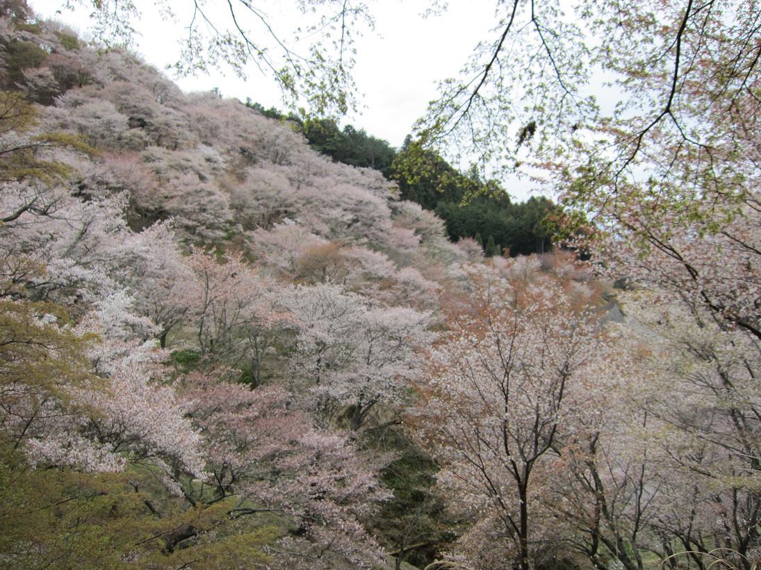 ことしの春は、_e0154524_114882.jpg