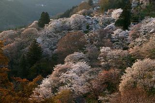 ことしの春は、_e0154524_1413212.jpg