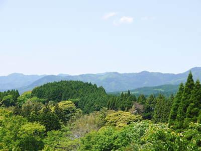 FLC日記 キウイの摘花、茶摘_a0254656_9443460.jpg