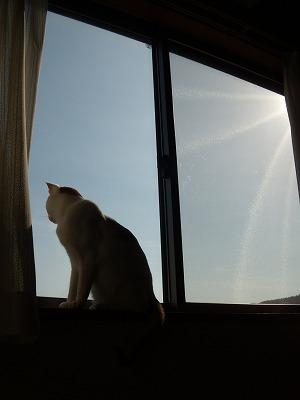 猫のいる生活!!_d0165772_2241852.jpg