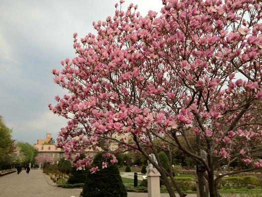 Spring flowers_e0014773_10402386.jpg