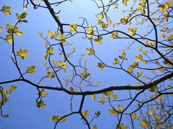 若葉の森林セラピータイム 申込状況_b0209774_1413335.jpg