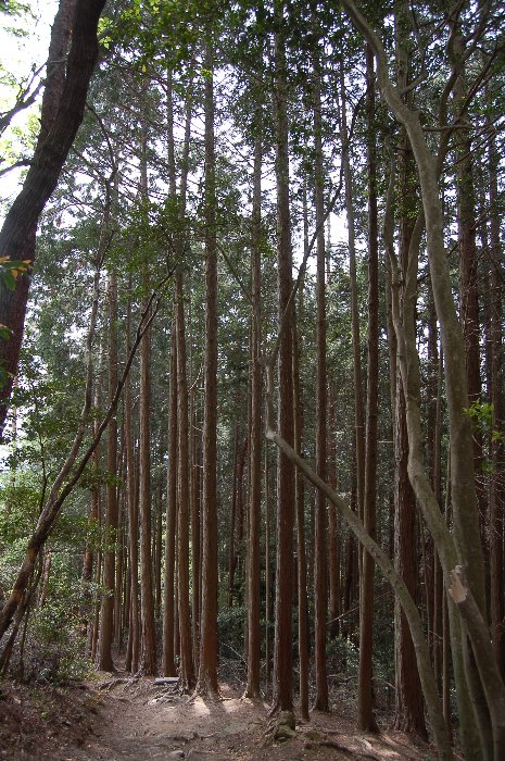 大文字山ハイキング_c0057390_21223991.jpg