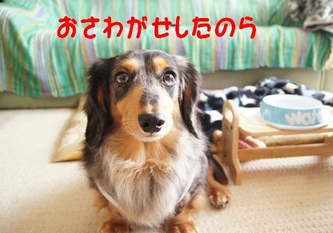 f0195891_20473492.jpg