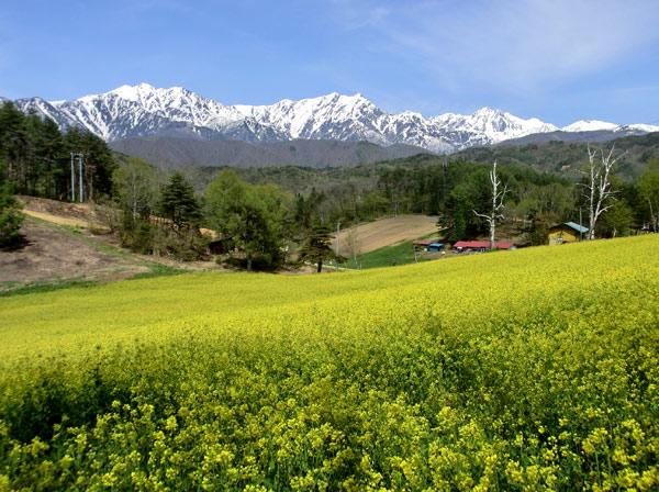 中山高原の菜の花(大町市) : 四季の信濃路