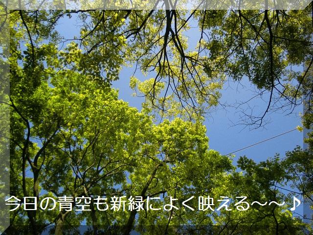 d0243802_1332474.jpg