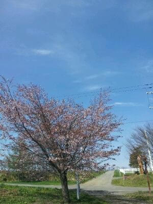 春のお花見シーズンです♪_a0164408_1340335.jpg