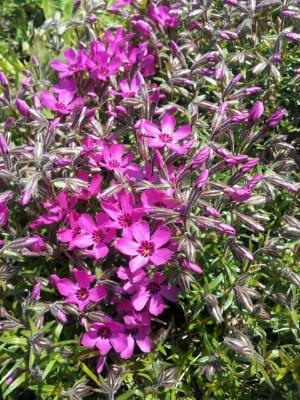 春のお花見シーズンです♪_a0164408_1417385.jpg