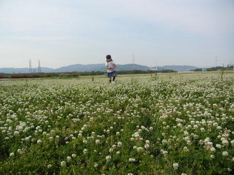 枚方大橋横の河川公園に行って来ました〜_a0059812_0323658.jpg
