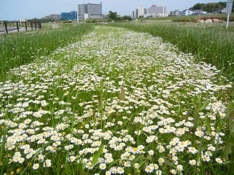 枚方大橋横の河川公園に行って来ました〜_a0059812_0394018.jpg