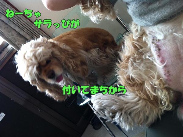 b0067012_17331061.jpg