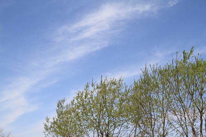 良い空の色_a0071514_193393.jpg