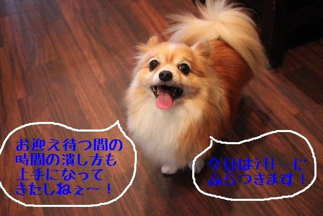 b0130018_16441562.jpg