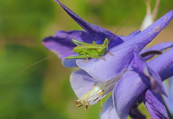 虫の好く花_f0214527_22333388.jpg