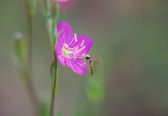 虫の好く花_f0214527_22344431.jpg