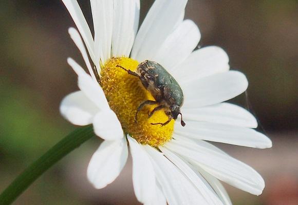 虫の好く花_f0214527_223496.jpg