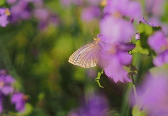 虫の好く花_f0214527_22365035.jpg