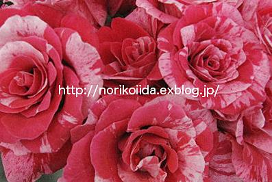 d0086230_20115299.jpg