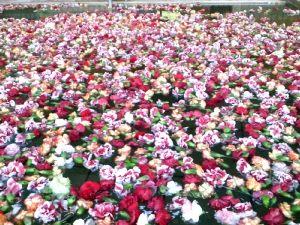 母の日のカーネーション風呂_c0141652_15483856.jpg