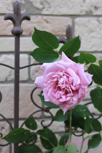 庭の花たち_e0158653_20505574.jpg