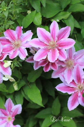 庭の花たち_e0158653_20584835.jpg