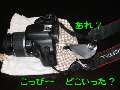 b0158061_224836.jpg