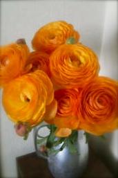 美しいもの_c0249163_20121232.jpg