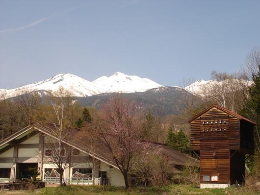 真っ白な乗鞍岳*山桜 すももの花の季節になりました_a0217365_1237682.jpg