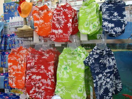 ハワイだで♪_e0181866_13121758.jpg