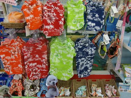 ハワイだで♪_e0181866_1365652.jpg